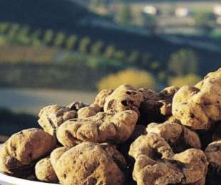 Alba - Wine, Truffles and Territory